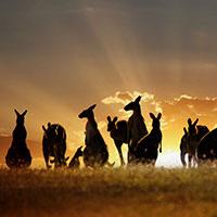 Voyageurs du Vin Coffret Australie et Nouvelle-Zélande 2020